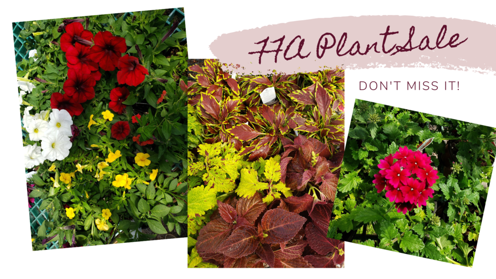 FFA Plant Sale Begins May 10